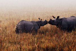 Luxury Wildlife Tour of Assam
