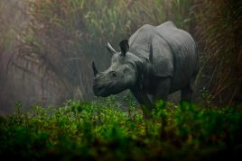 Kaziranga National Park Wildlife Tour